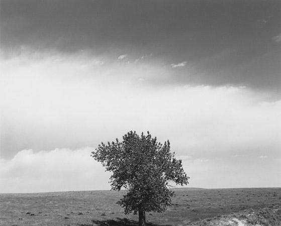 Robert Adams 'Tree' below sky black and white
