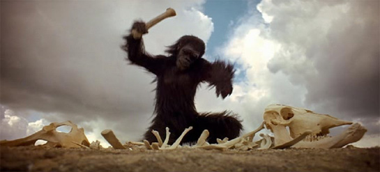 A Movie Still featuring a great ape from Stanley Kubrick's allegorical science fiction story 2001: A Space Odyssey