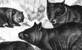 {FICTION} Strange Mammals