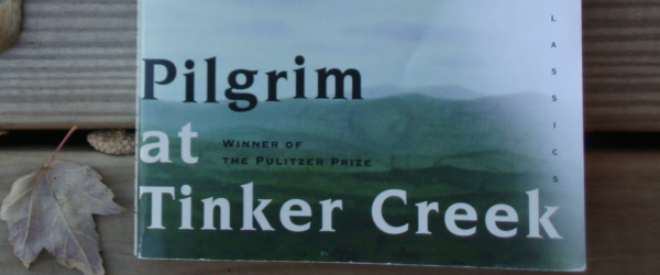 Blinded By The Light: Pilgrim at Tinker Creek