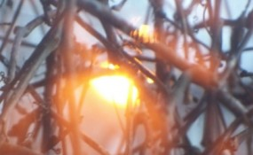 Evocative photo of the sun setting through bare tree branches