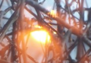 Evocative photograph of sunset through winter branches