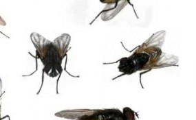 Close-up images of common house fly from different angles and in different postures