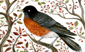 North american robin bird painting poetry